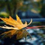 Natural-Leaf-Photos
