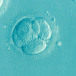 A big picture look at IVF
